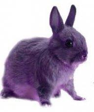 BunnySlayah69