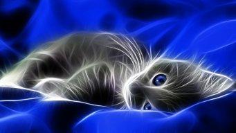 Bluecheesegirl1